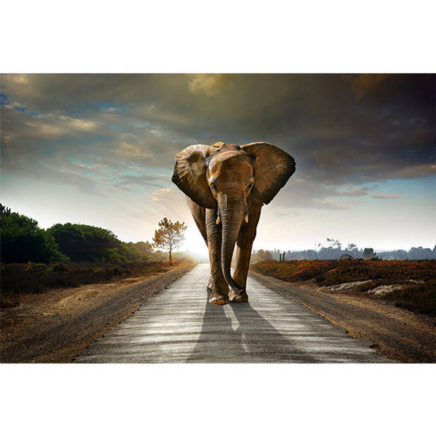 Schilderij Walking Elephant