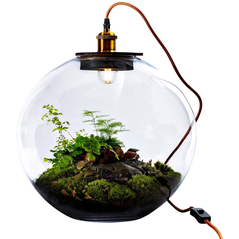 Growing Concepts DIY Duurzaam Ecosysteem Bol Demeter Giant met Lamp - Botanische Mix - H42xØ40cm