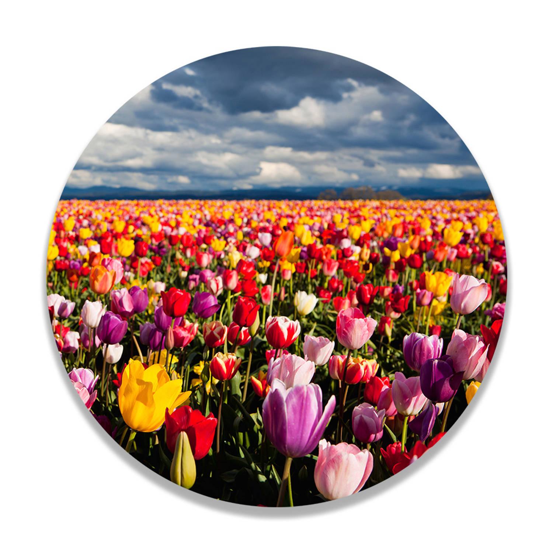 Wandcirkel Kleurrijk Tulpenveld