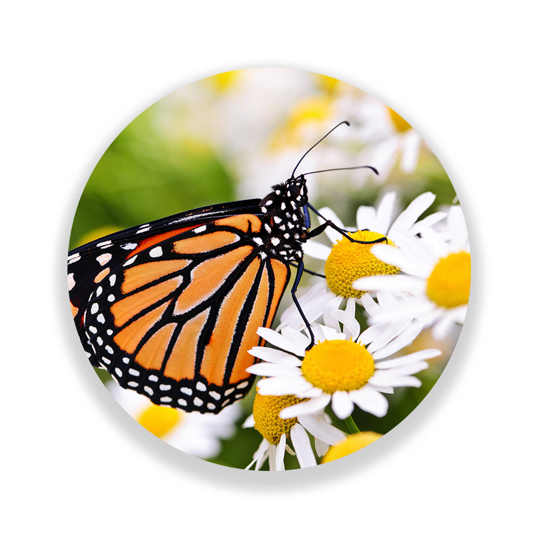 Wandcirkel Monarch Butterfly