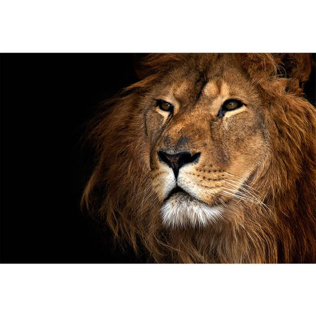 Schilderij Lion Close Up
