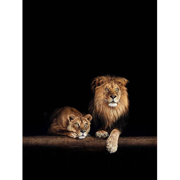 Schilderij Leeuw en Leeuwin