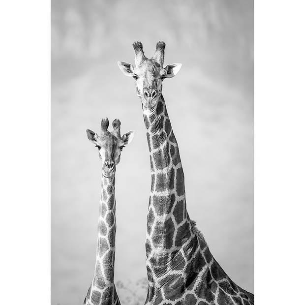 Schilderij Giraffenpaar