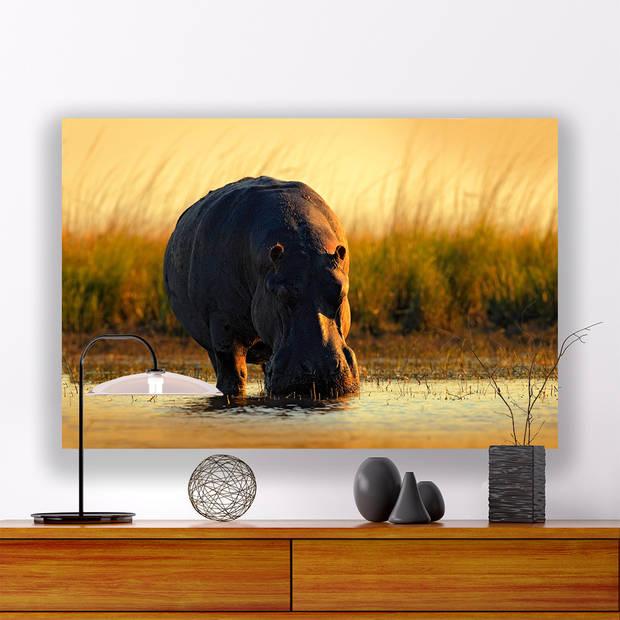 Schilderij Nijlpaard in de Zon