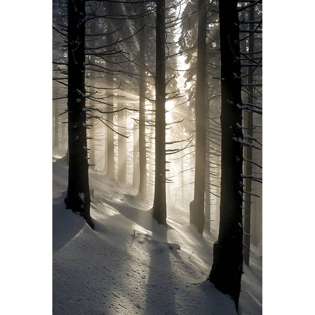 Schilderij Winter Forest