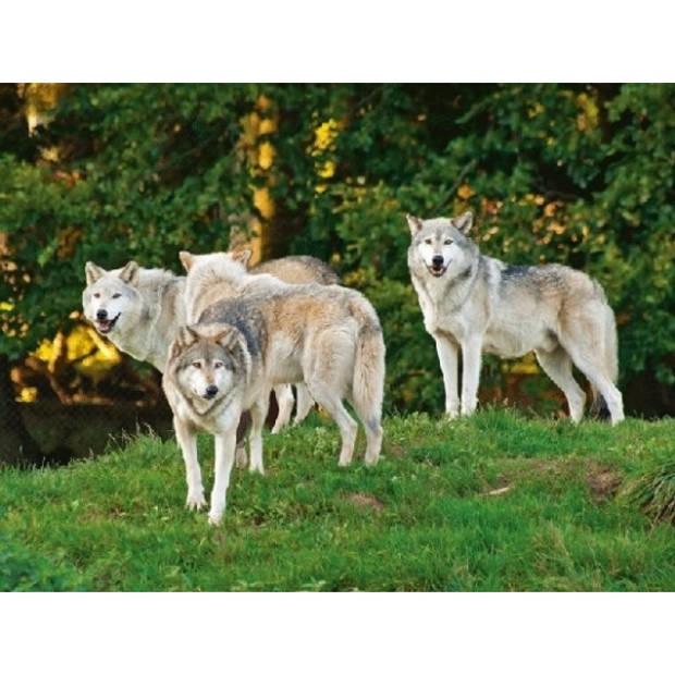 Placemat wolf/wolven 3D print 30 x 40 cm - Dineren of knutselen - Dieren cadeau